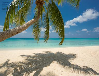 Palm tree on Seven Mile Beach and Caribbean Sea